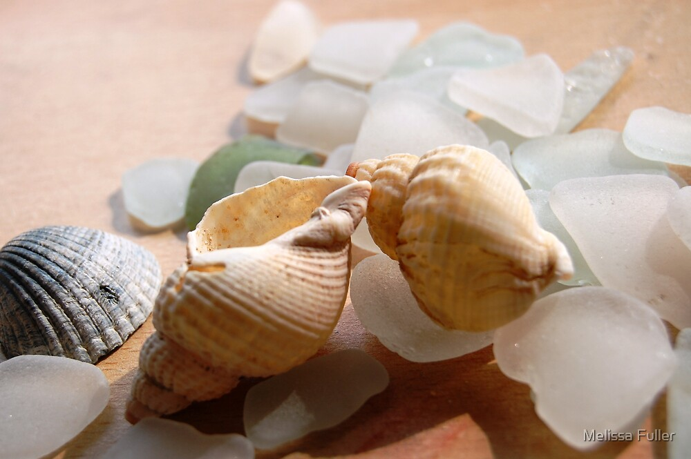 She sells sea shells by Melissa Fuller