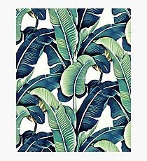 Banana Leaves Photographic Print