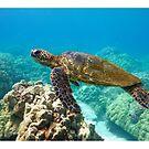 Green Sea Turtle by Kana Photography