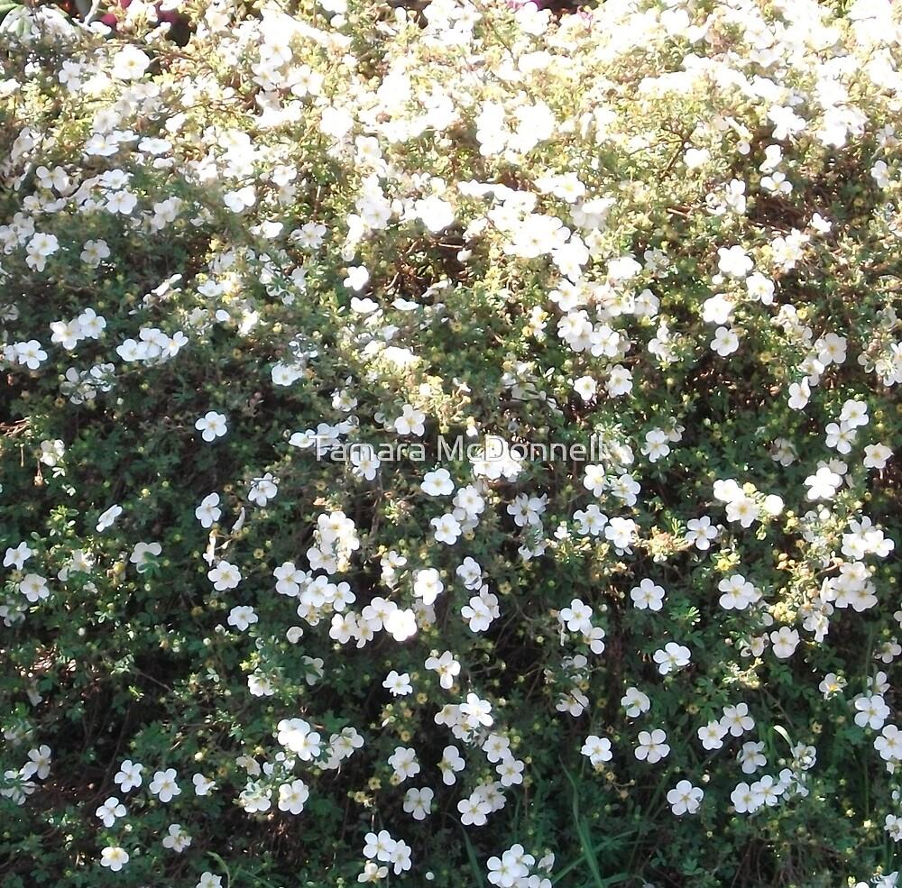 Snowing flowers by Tamara Lindsey