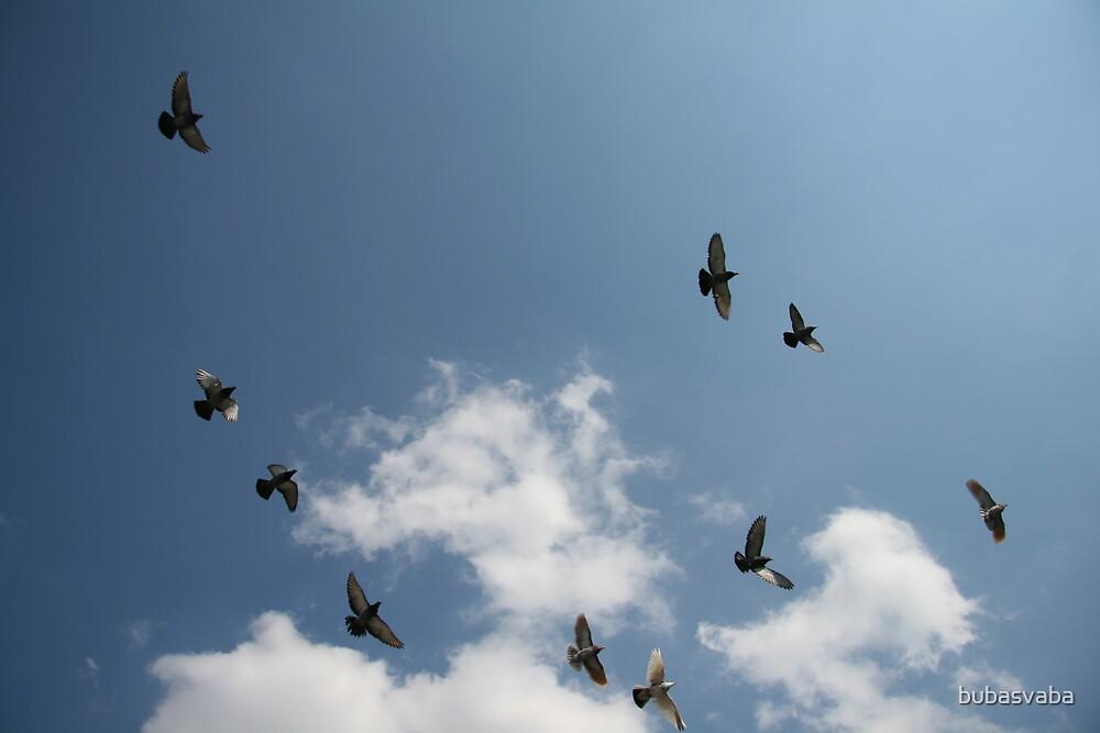 dove sky by bubasvaba