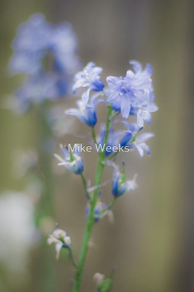 Blue Flower by Mike Weeks