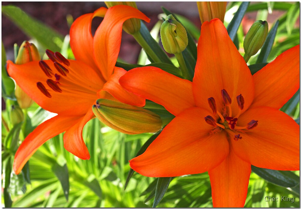 Orange Days by Chet  King