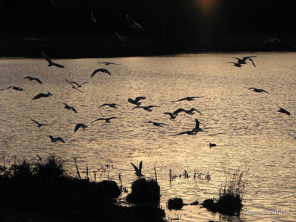 Birds by Dean  Swinfield