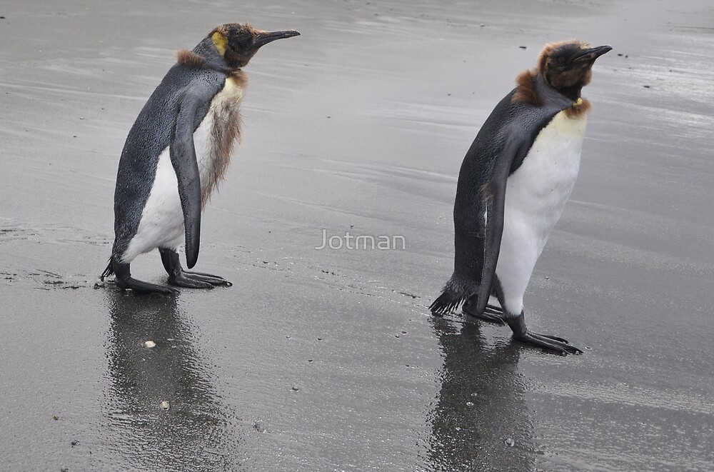 Grouchy Penguins by Jotman