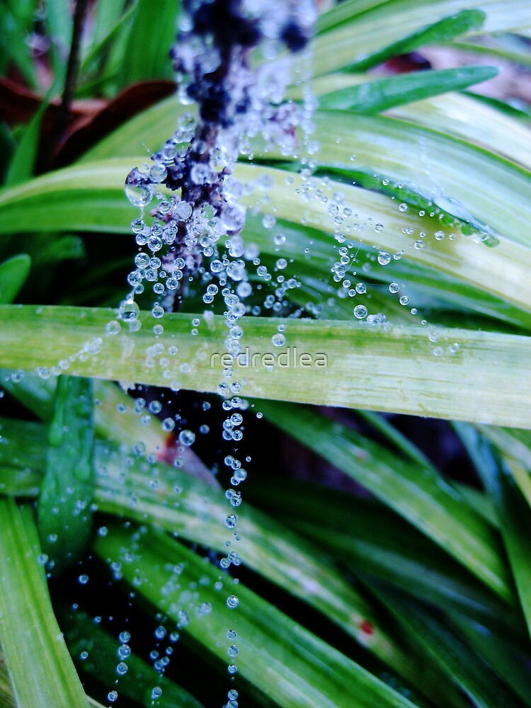 Drops of Water 8 by redredlea