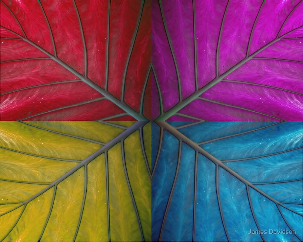 Abstract Giant Leaf by James Davidson
