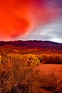 RED by photosbyflood