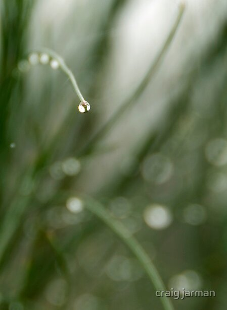 the droplet by craig jarman