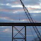 Evening Crane  by Wanda Raines