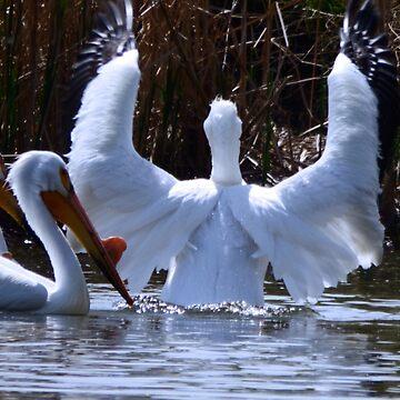 Angel Wings Pelican by NicoleK-design
