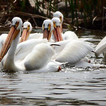 Group of Pelican by NicoleK-design