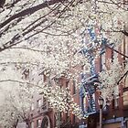 Blossom Of East Village by DebraCox