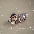 Duckling by James Galler