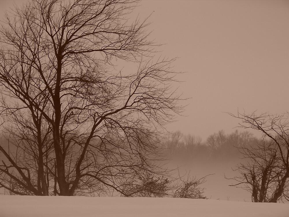 Tortured Trees in Winter by MRuss