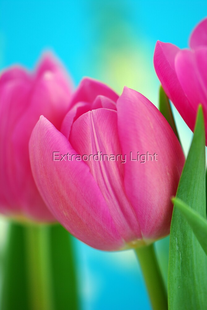 Young Love by Extraordinary Light