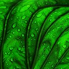 Cool Green Leaf by Sherilee Evelyn