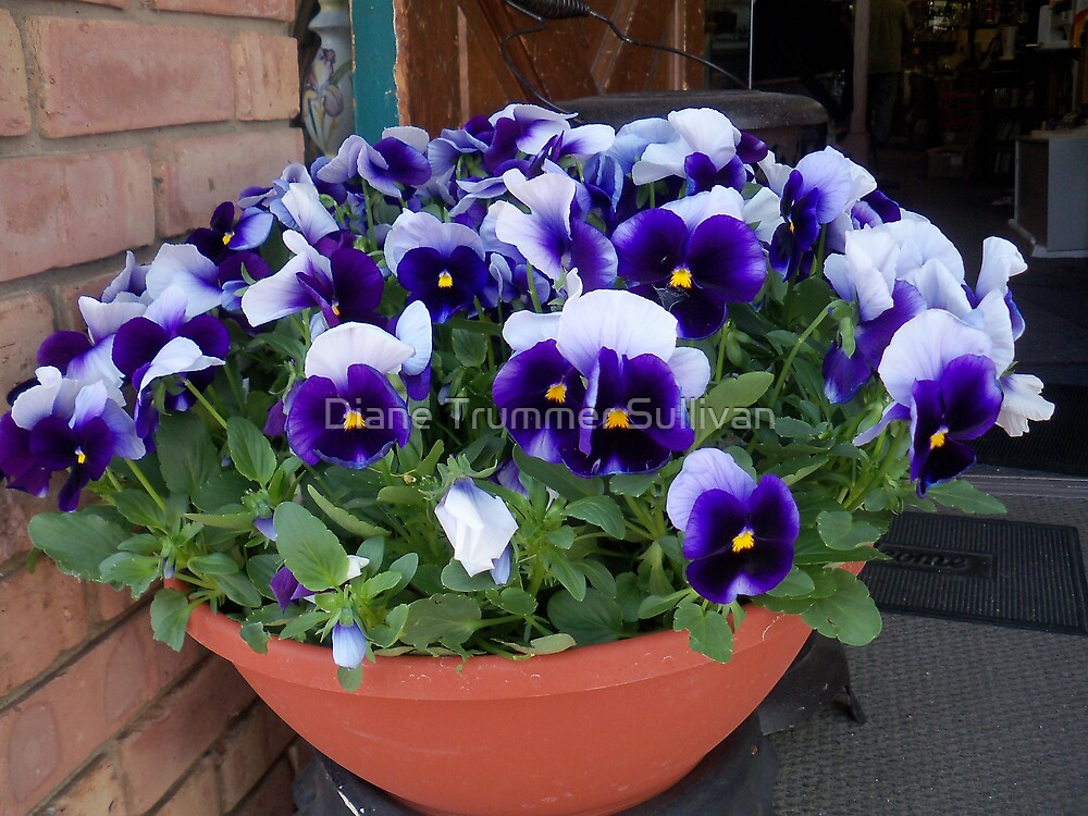MOM'S DAY FLOWERS 2009 by Diane Trummer Sullivan