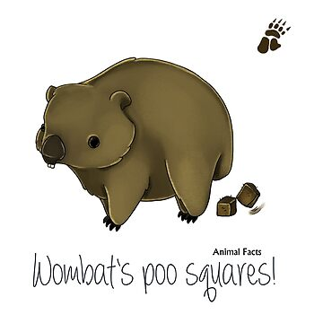 Animal Facts Australia - Wombat by MiMoCreative