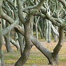 Tree Grove by mrthink