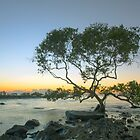 Lone Mangrove by Peter Doré
