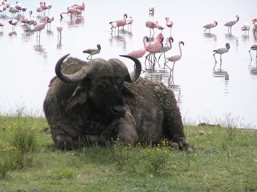 Pink Flamingos and Water Buffalo by Kellie Scott