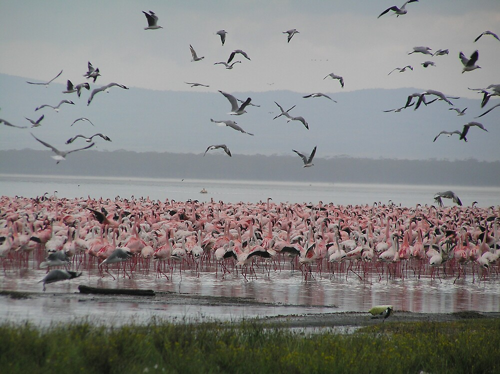 Pink Flamingos and Seagulls by Kellie Scott