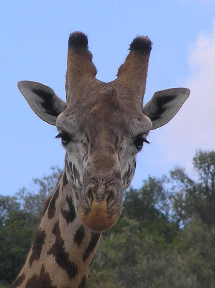 Giraffe by Kellie Scott
