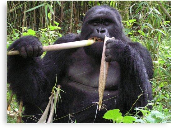 Gorilla by Kellie Scott