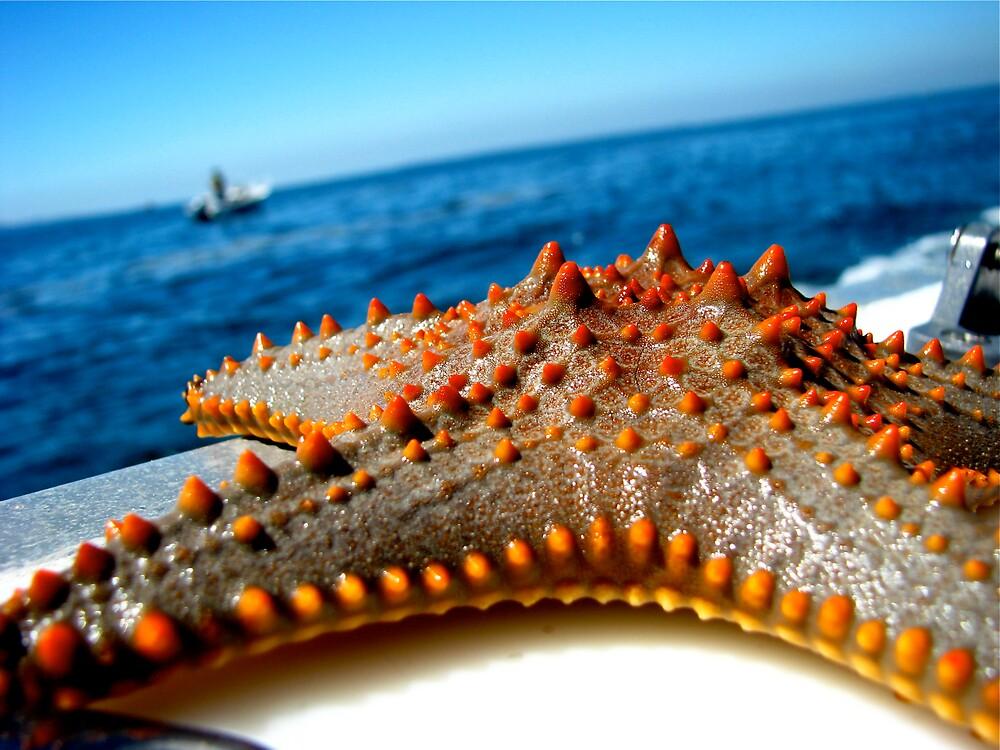 Starfish by djohnston