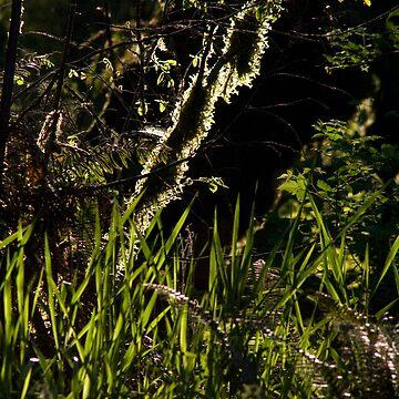 Moss by mlcltd