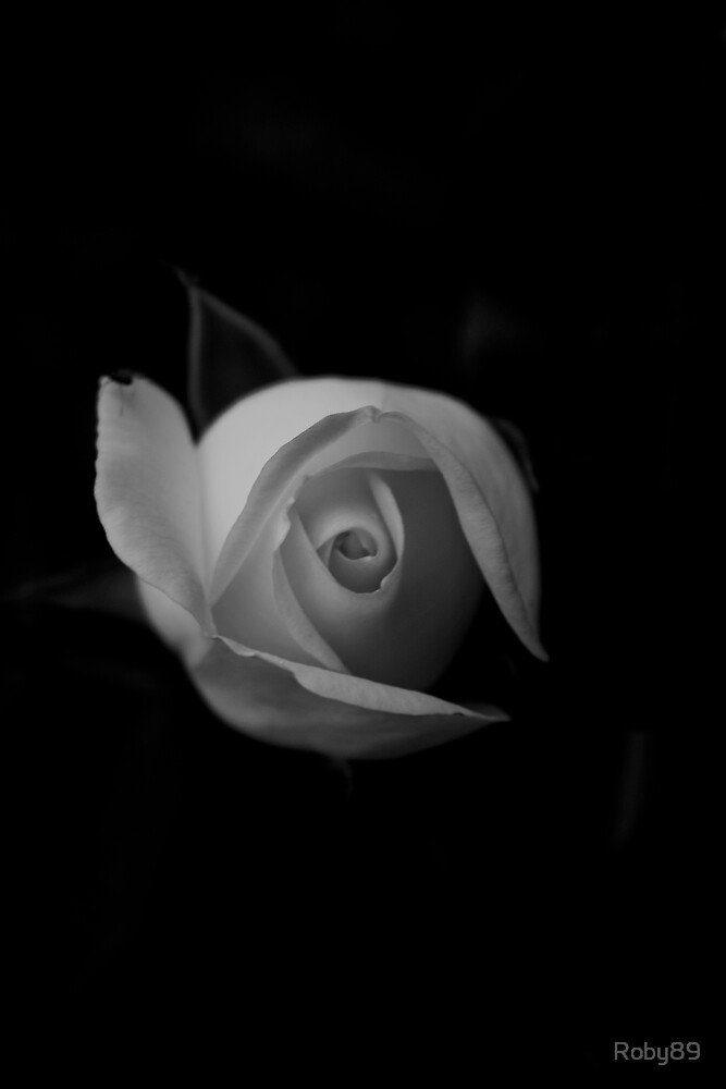 Rose B/W by Roby89