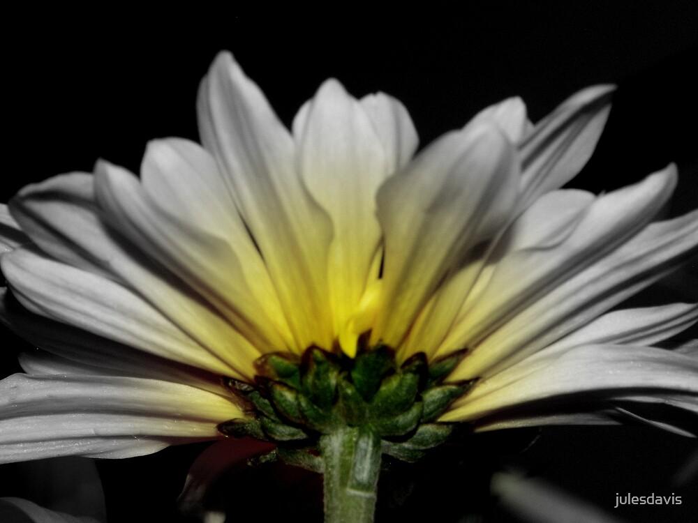 White Daisy Yellow Glow by julesdavis