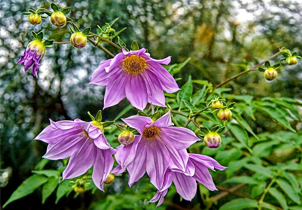 Perfectly Purple by Debbie Ryan