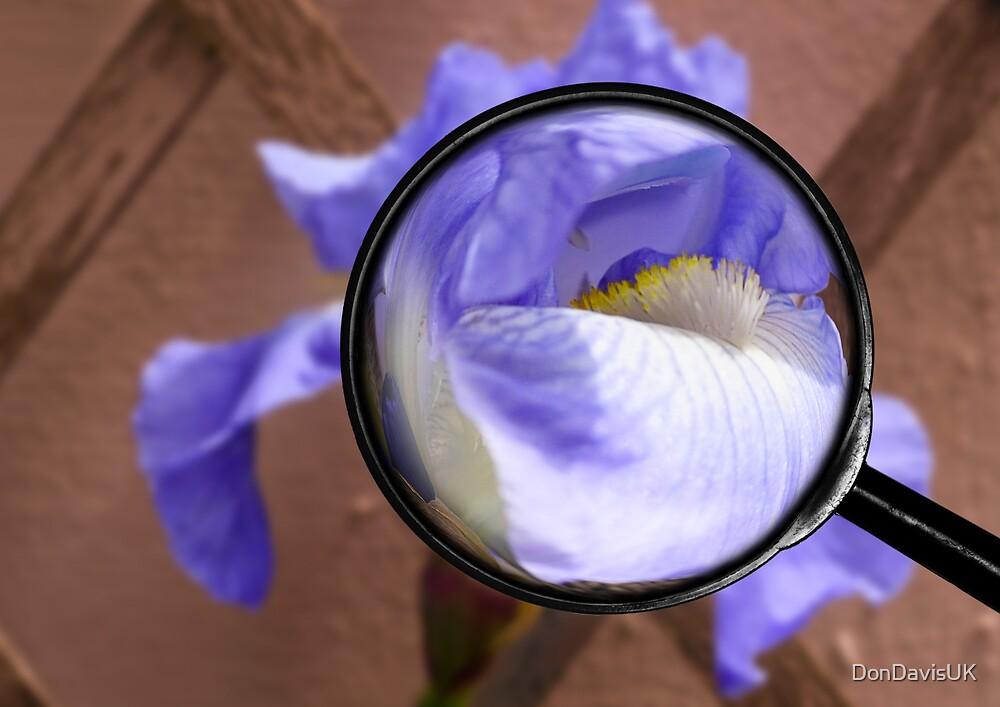 Magnified Iris by DonDavisUK