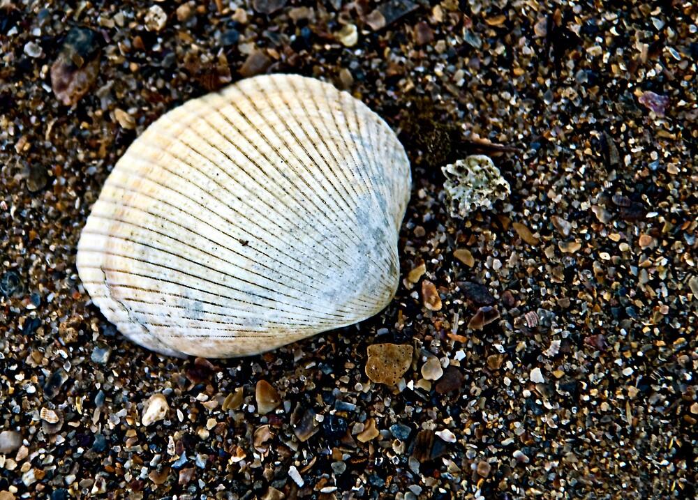 Shell by Debbie Ryan