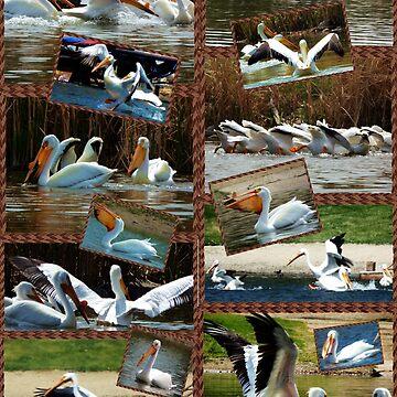 World of Pelicans by NicoleK-design