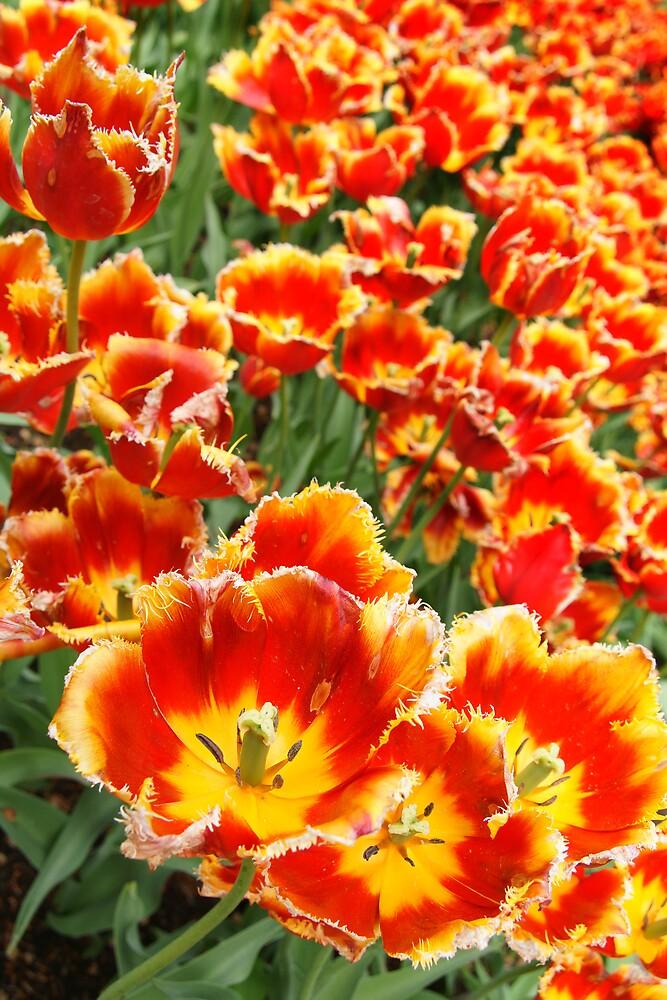 Flower, no. 1 by PeterBusser