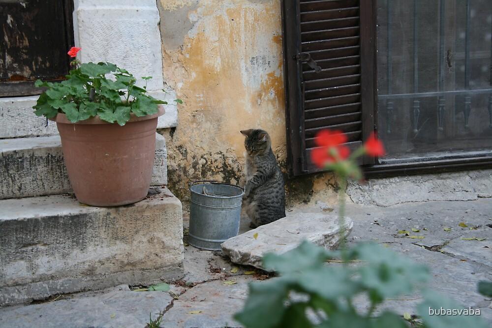 cat & cat by bubasvaba