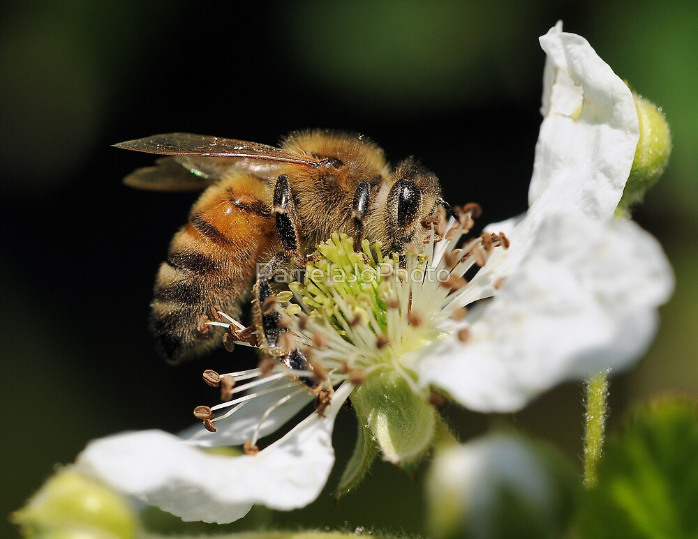 Busy Bee by PamelaJoPhoto
