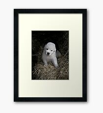Great Pyrenees Puppy Framed Print