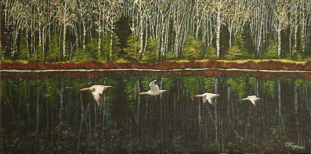 Snow Geese by Carol Seymour