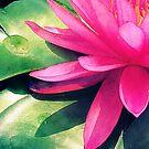 Waterlily by shawntking