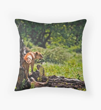 Lioness on a Log Throw Pillow