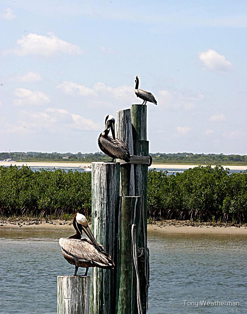 Pelicans by Tony Weatherman