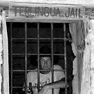 Jailed Bruce by Debbie Irwin