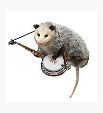 Opossum spielt Banjo Fotodruck