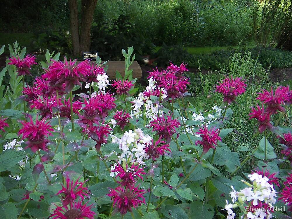 Wildflower Grandeur by Sherry O'Neill