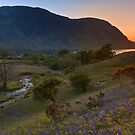 Rannerdale Valley Bluebells at Sunset by derekbeattie