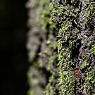 Mossy (moss on tree with depth of field) by shawntking